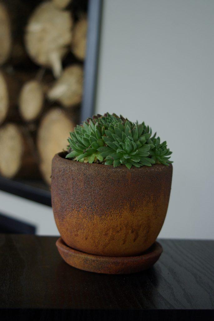 Donice Pokryte Rdzą - mała doniczka z sukulentem w nowoczsnym wnętrzu.